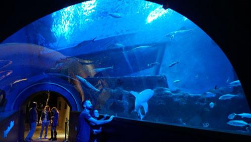 que ver en el acuario de sevilla