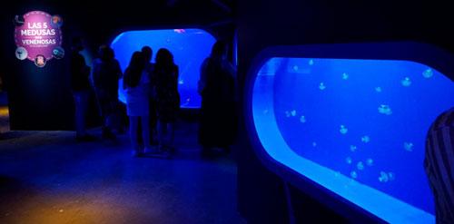 visitar acuarios gigantes